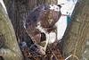 bird_105