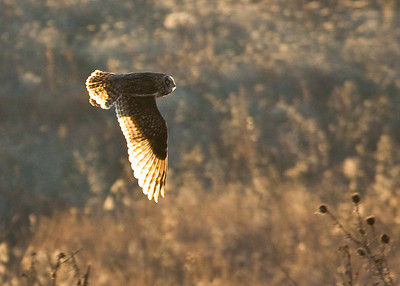 Hawks, Owls and Sand Hill Cranes