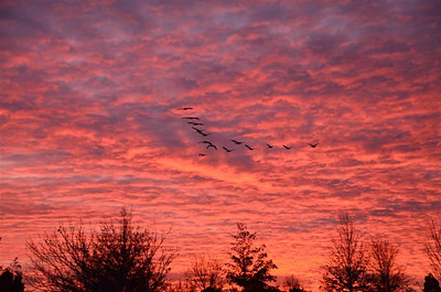 Geese flying off into the sunset at Rancho San Rafael.