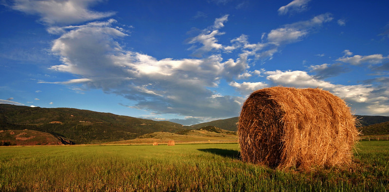 Yampa Valley Hay