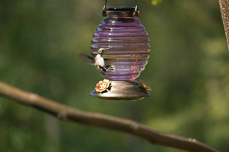 Hummingbird in Reverse