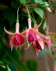 """Dancing Petals"" Honorable Mention Nature Florals Adult Division"