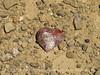 Chert heart (1)