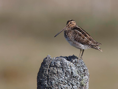 Snipe on post