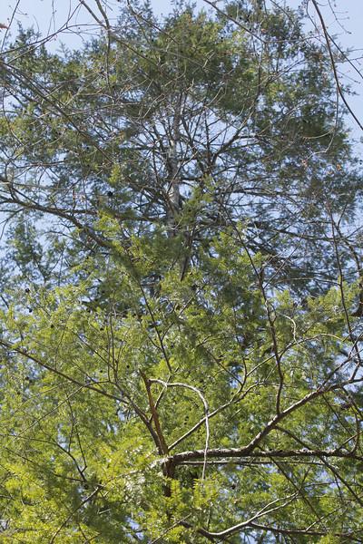 Hemlock Bluffs Nature Preserve in Cary, NC