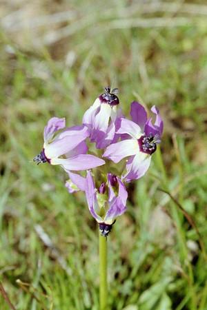 Henry Coe hiking Feb 25(?) 2006--plants