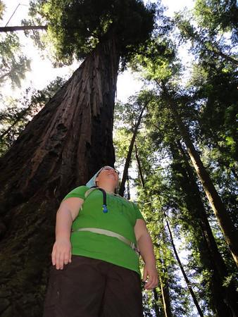 I am redwood!
