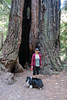 Henry Cowell State Park 2016