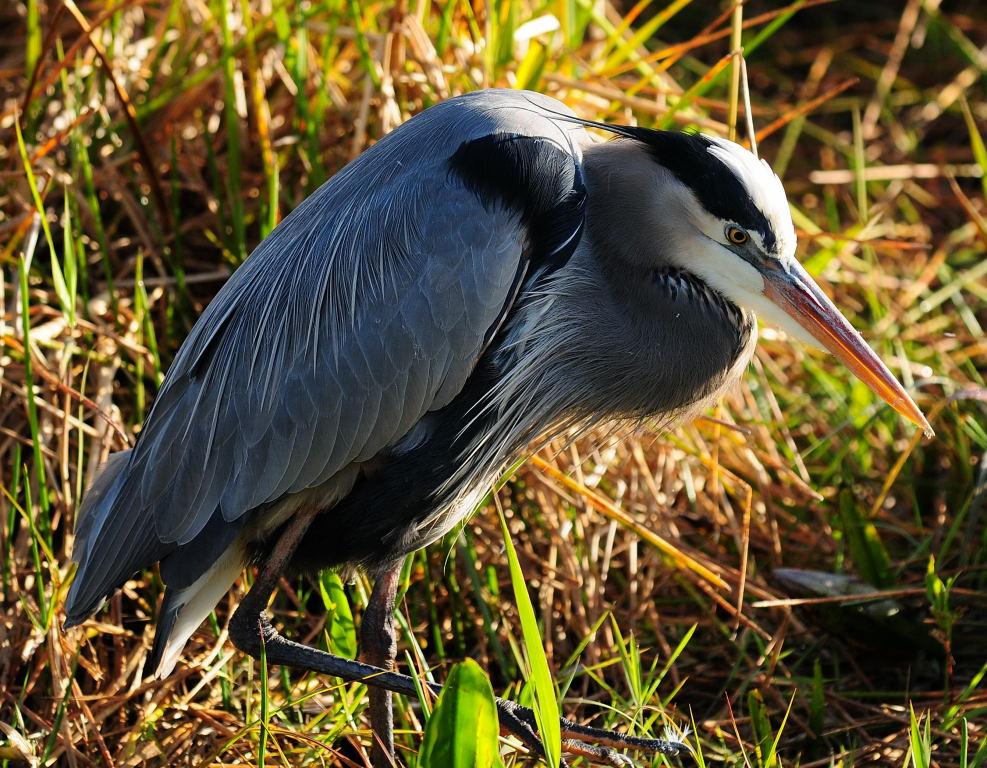 Heron Anhinga Trail, Everglades National Park Florida  © 2009