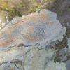 Hikin' for Lichens - Turkey Creek Nature Preserve