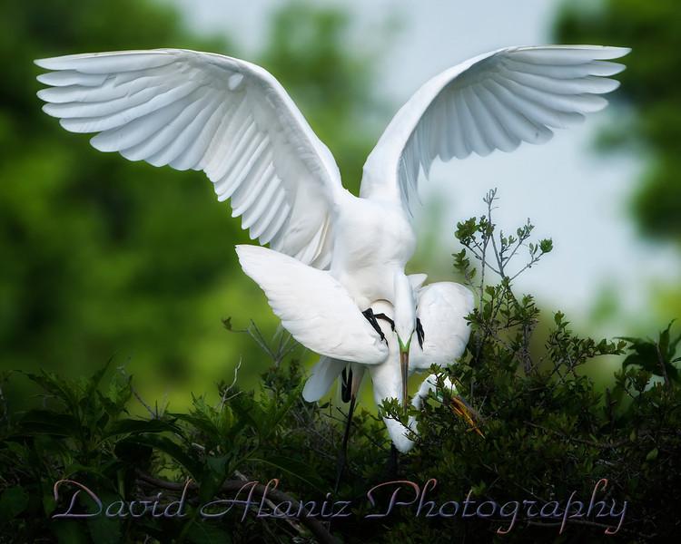 High Island Rookery_20120331_0513xcn