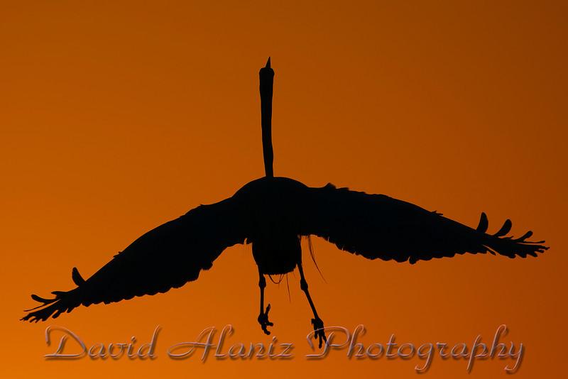 High Island Rookery_20120406_0041xcn