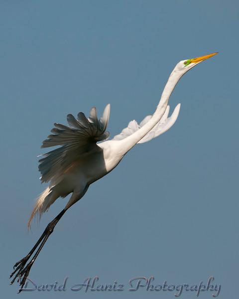 High Island Rookery_20120331_1182xcn
