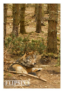 The recently added wolf enclosure, which offers more opportunity for the wolves to hide from prying eyes.