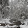Snowy creek on a winter morning.  Yosemite National Park, California, USA