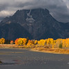 Ducks on the Snake River in fall, witih Mount Moran looming in stormy weather.  Grand Teton National Park, Wyoming, USA