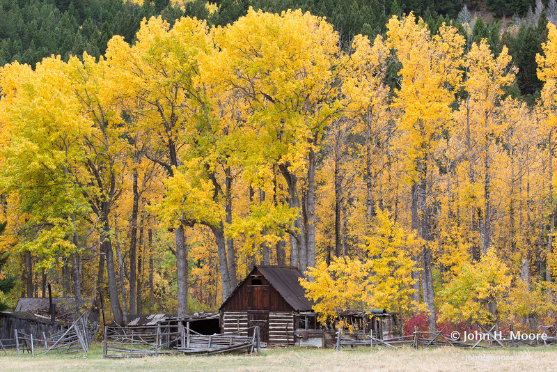 A cabin in the woods along Montana Highway 1 outside of Anaconda, Montana.