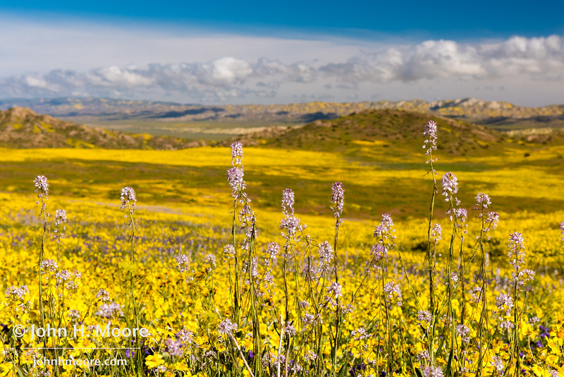 Looking out across the plain at Carrizo Plain National Monument in Central California.