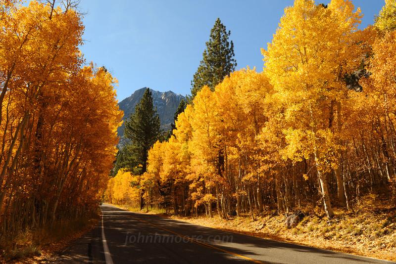 An aspen-lined road in fall in the Eastern Sierras