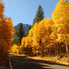 An aspen-lined road in fall in the Eastern Sierras
