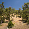 From Troodos mountains, Cypros 2008