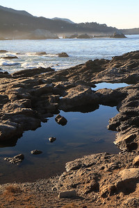 Point Lobos State Reserve Jan18th 6 of 259