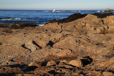 Point Lobos State Reserve Jan18th 8 of 259