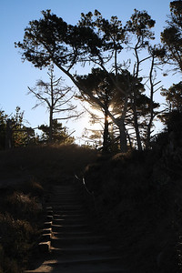 Point Lobos State Reserve Jan18th 60 of 259