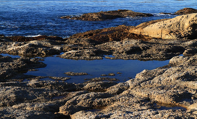 Point Lobos State Reserve Jan18th 20 of 259