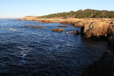 Point Lobos State Reserve Jan18th 56 of 259