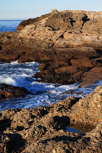 Point Lobos State Reserve Jan18th 11 of 259