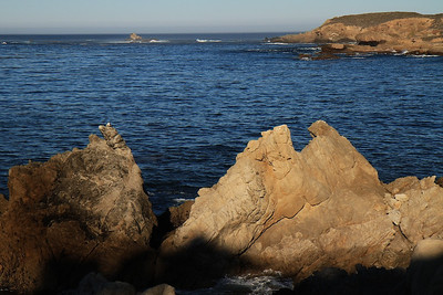 Point Lobos State Reserve Jan18th 59 of 259