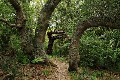 Marin Headlands_Muir Woods May30  054