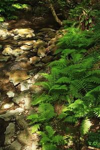 Marin Headlands_Muir Woods May30  137