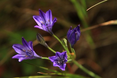 Marin Headlands_Muir Woods May30  156