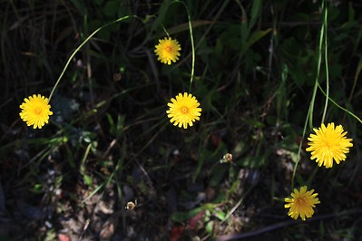 Marin Headlands_Muir Woods May30  202