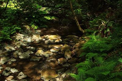 Marin Headlands_Muir Woods May30  136