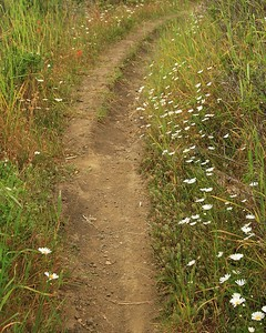 Marin Headlands_Muir Woods May30  050