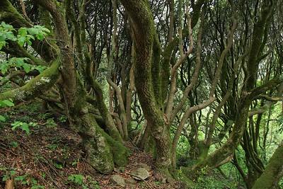 Marin Headlands_Muir Woods May30  055