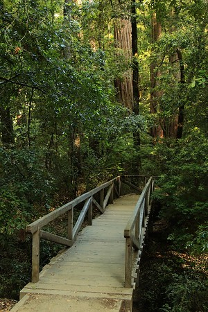 Big Basin Father's Day hike June 19th, 2016