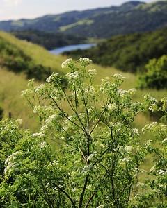 Briones hike Apr24th  053