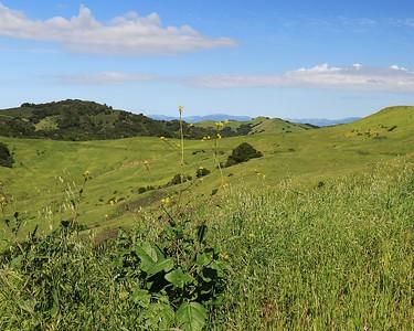 Briones hike Apr24th  054