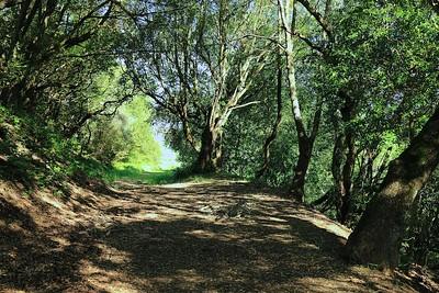 Briones hike Apr24th  042