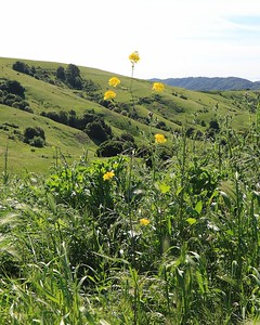 Briones hike Apr24th  045