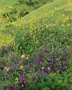Briones hike Apr24th  014