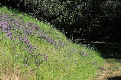 Briones hike Apr24th  040