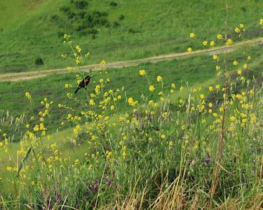 Briones hike Apr24th  010