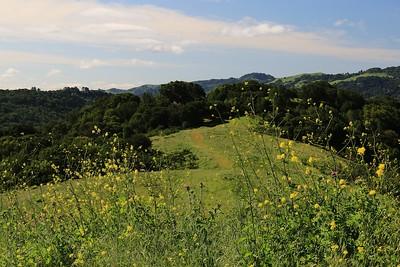 Briones hike Apr24th  060