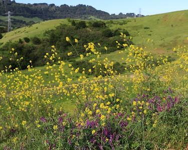 Briones hike Apr24th  013