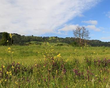 Briones hike Apr24th  006